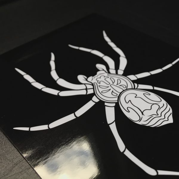 Wolf Spider Print showing glossy paper